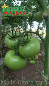 malla espaldera para tomate