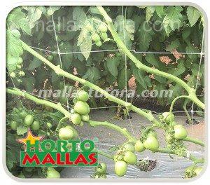 Soporte de tomates con tutoreo