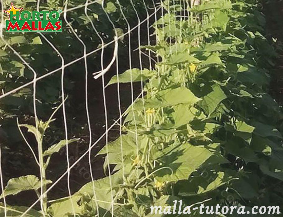 malla tutora en cultivos de pepinos